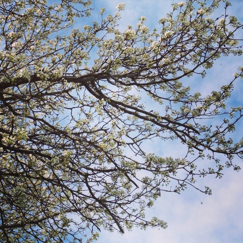 Spring is springing, Teaspoon of Nose