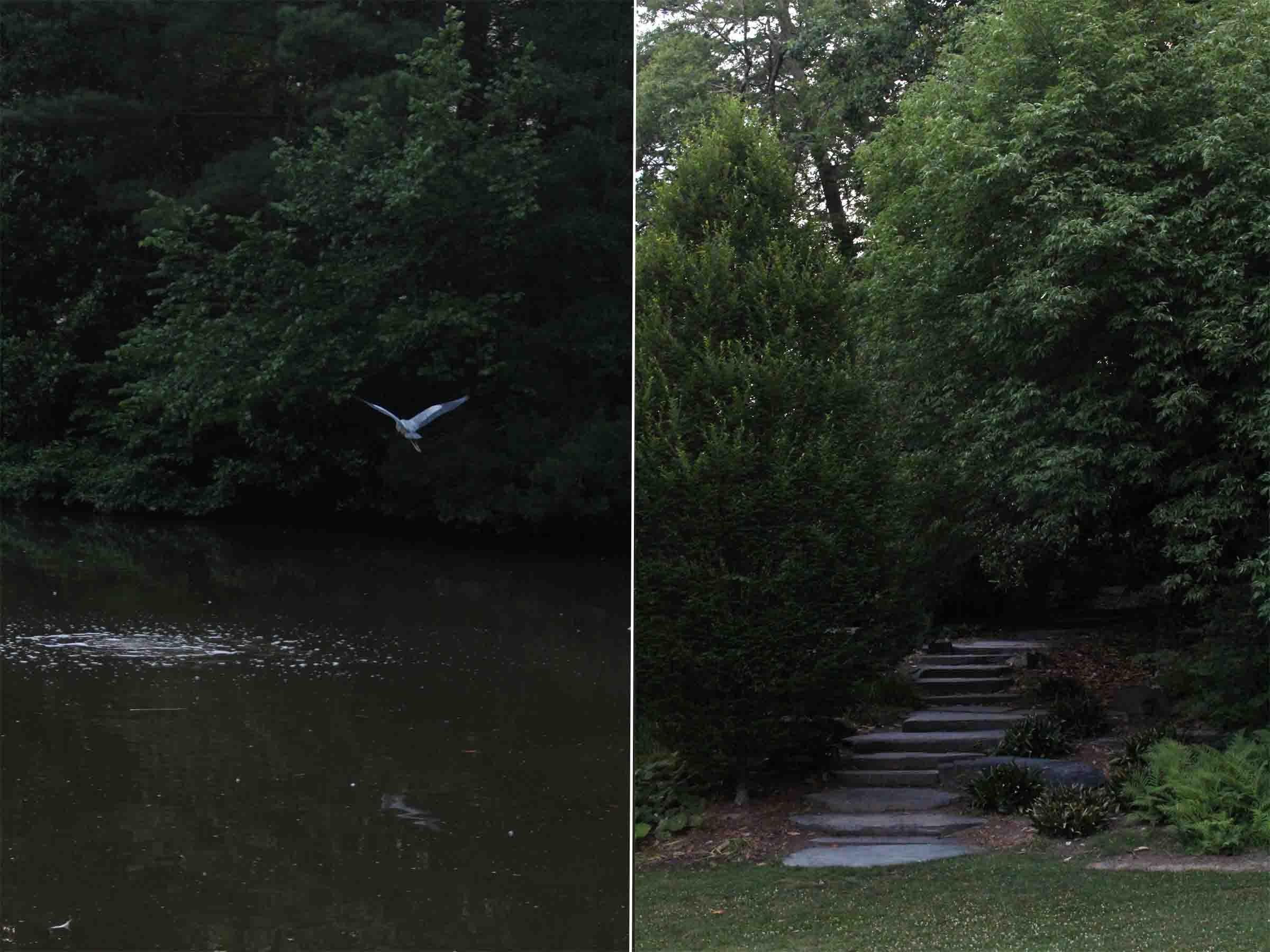 A summertime study session at Duke Gardens!