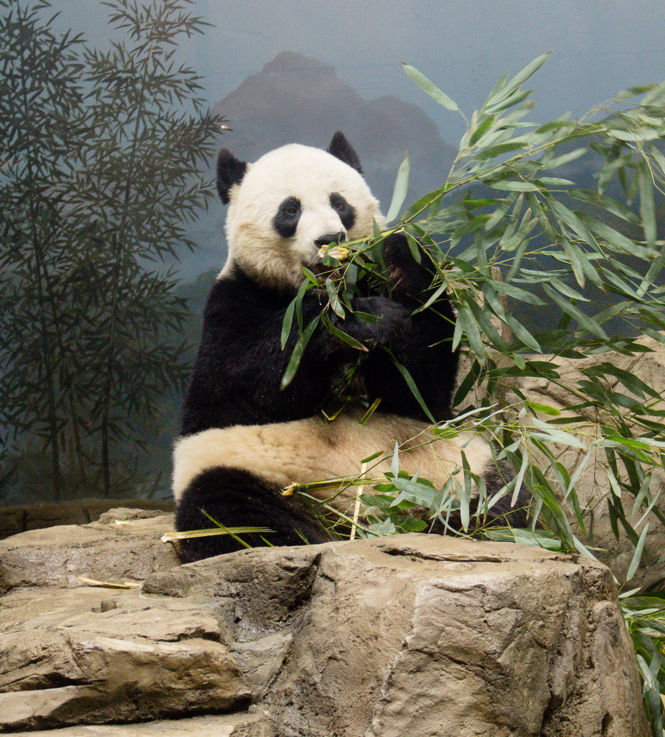The National Zoo is one of my favorite museums in DC! Check my blog post for a few more favorites.