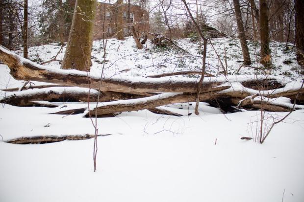 SnowDC-3