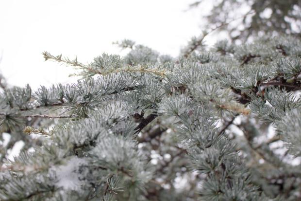 SnowDC-4